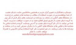 files-gallery-negy13[18c872b013178aad9eaaaec98215d9ac].jpg
